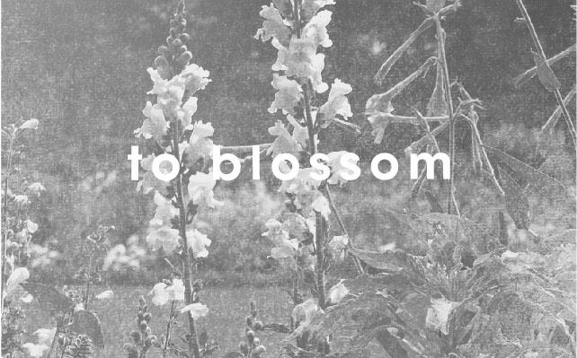 to blossom